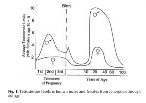 Testosteron Mann Frau
